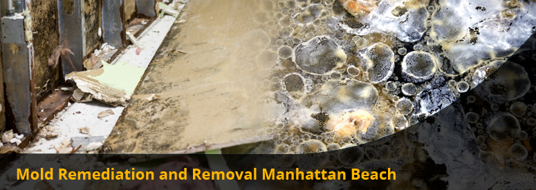 Mold Remediation and Removal Manhattan Beach CA